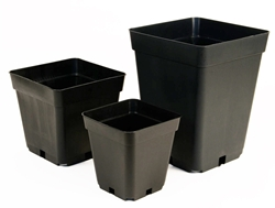 Picture of Square Pots