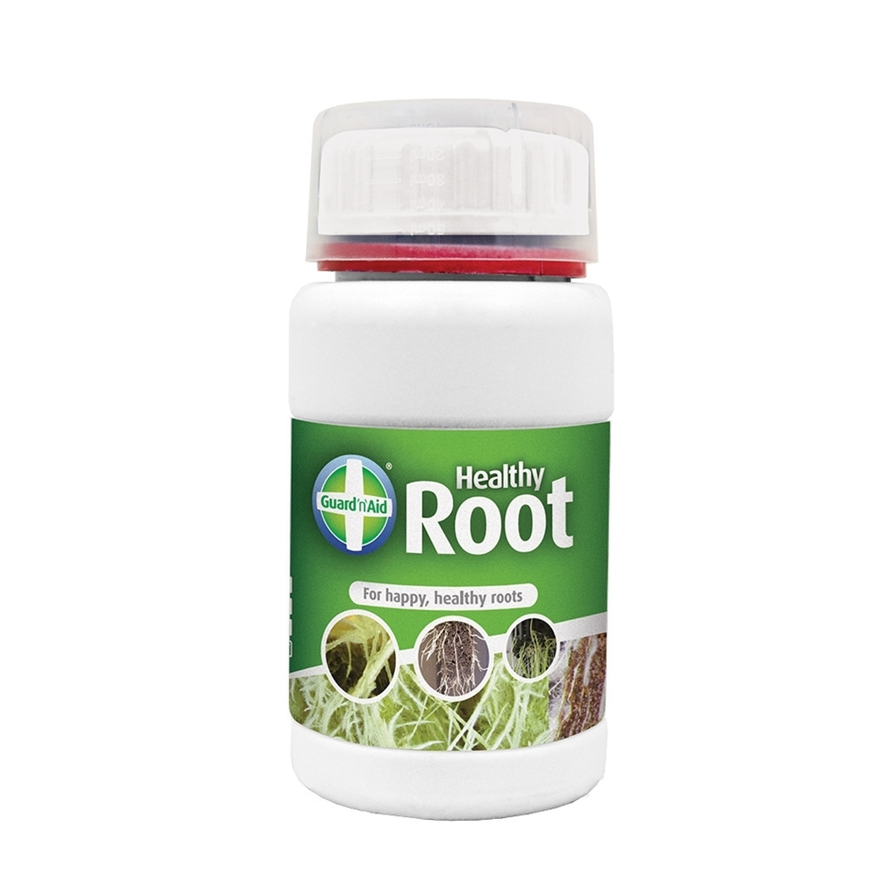 Picture of Healthy Root