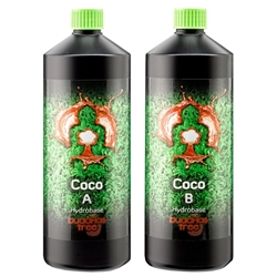 Picture of Buddhas  Tree Coco (A&B) Nutrients