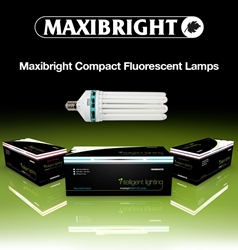 Picture of Compact Fluorescent Lamp (CFL) Red and Blue Spectrum